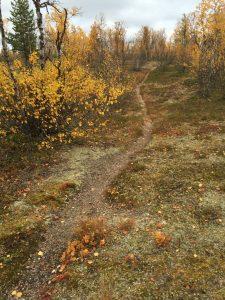 Att återta samisk traditionell kunskap (dekolonisering)